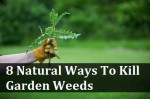 8 Natural Ways To Get Rid Of Garden Weeds