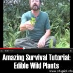 Amazing Survival Tutorial: Edible Wild Plants