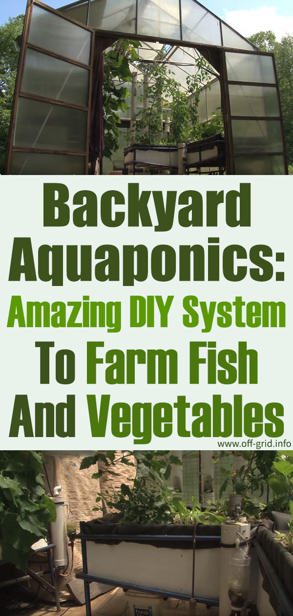 Backyard Aquaponics Amazing DIY System To Farm Fish And Vegetables