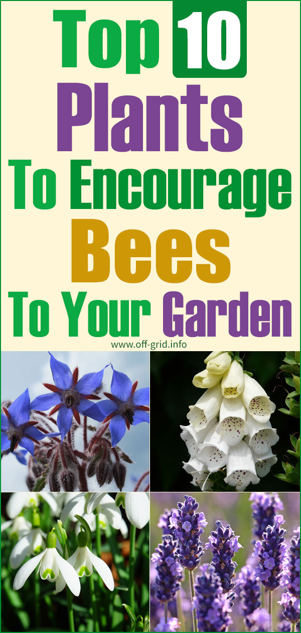 Top 10 Plants To Encourage Bees To Your Garden