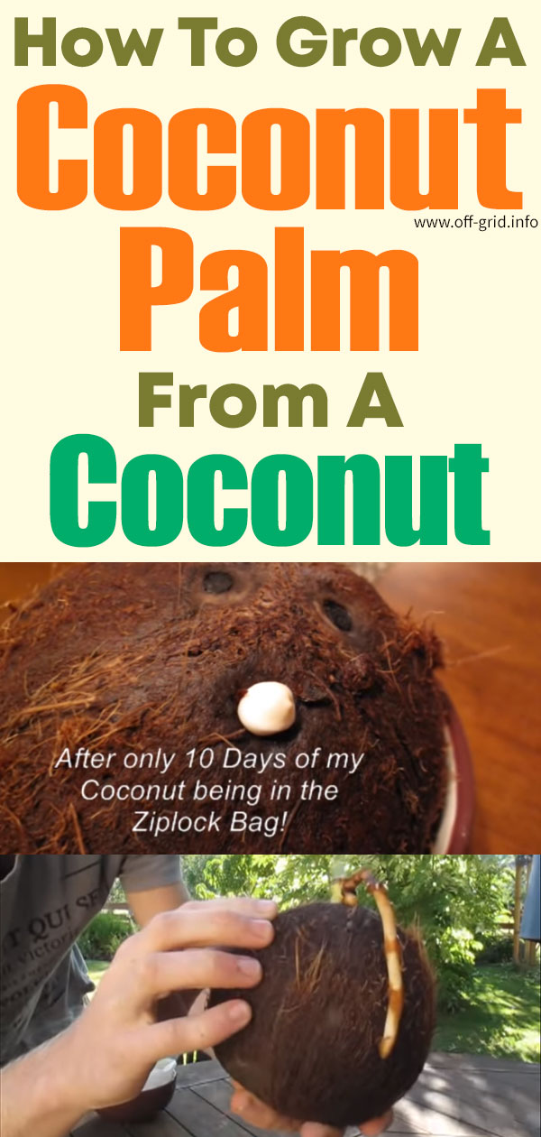 How To Grow A Coconut Palm From A Coconut