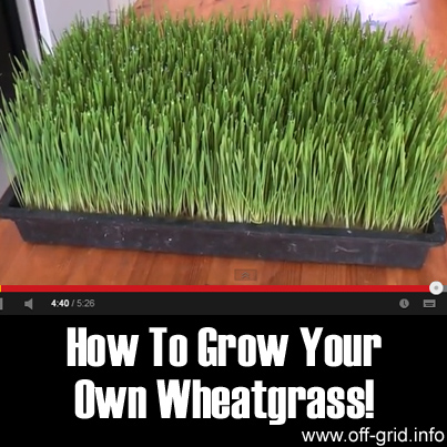 How To Grow Your Own Wheatgrass!