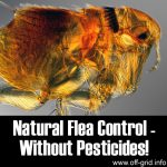 Natural Flea Control Without Pesticides