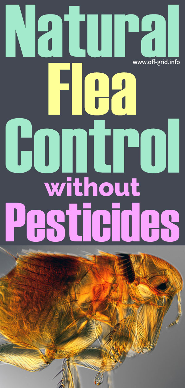 Natural Flea Control Without Pesticides - PI