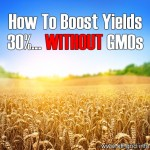 How To Boost Yields 30%… Without GMOs