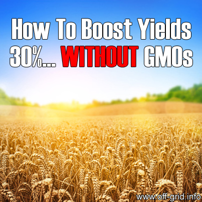 How To Boost Yields 30 Percent Without GMOs