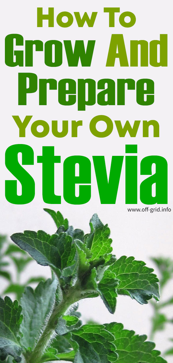 How To Grow And Prepare Your Own Stevia