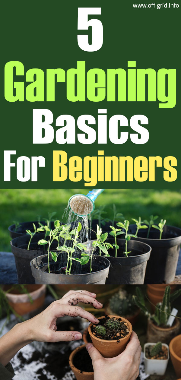 5 Gardening Basics For Beginners