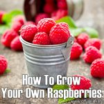 How To Grow Your Own Raspberries