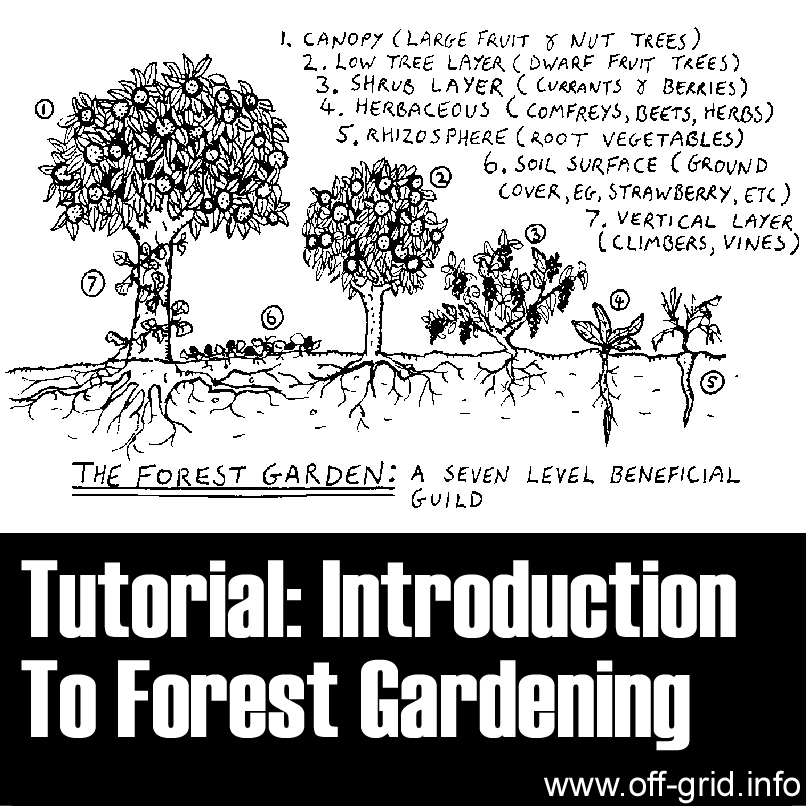 Tutorial- Introduction To Forest Gardening