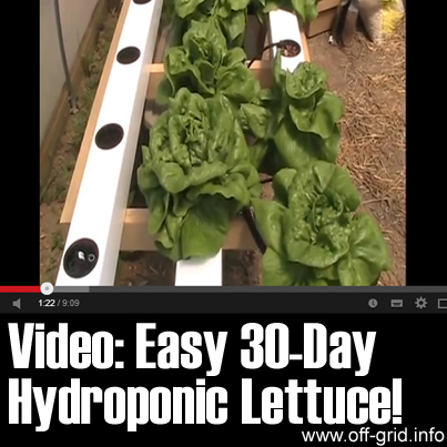 Video - Easy 30 Day Hydroponic Lettuce