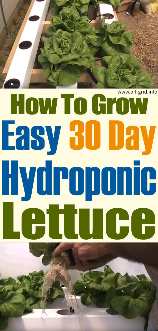 Easy 30 Day Hydroponic Lettuce