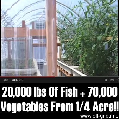 20,000 lbs Of Fish + 70,000 Vegetables From One Fourth Acre!!