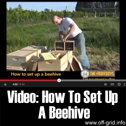 Video - How To Set Up A Beehive