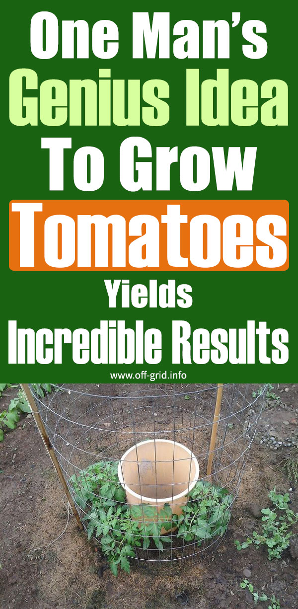 One Man's Genius Idea To Grow Tomatoes Yields Incredible Results
