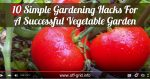10 Simple Gardening Hacks For A Successful Vegetable Garden