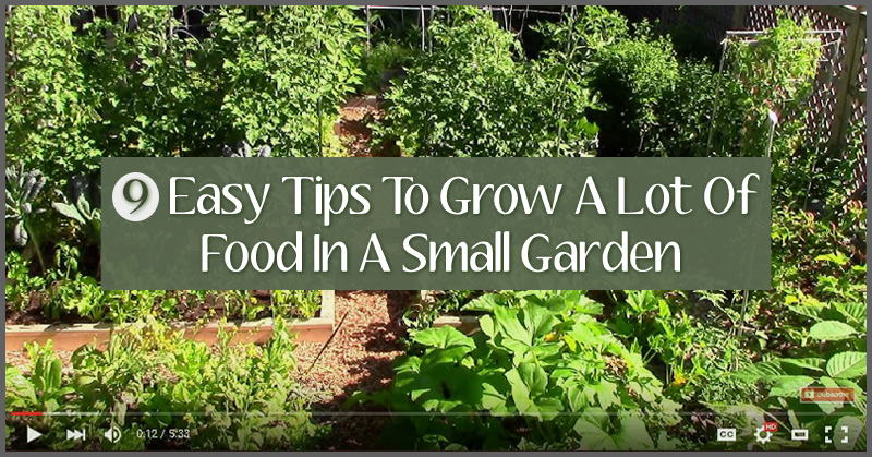 9 Easy Tips To Grow A Lot Of Food In A Small Garden Off Grid