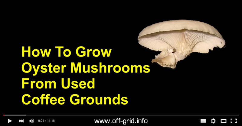 How To Grow Oyster Mushrooms With Used Coffee Grounds - Cheap And Easy
