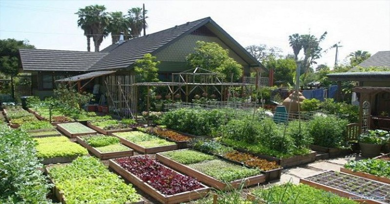 Watch How This Family Produces 6,000 Pounds of Food In Their Small Yard