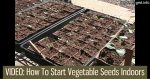 How To Start Vegetable Seeds Indoors