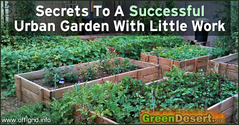 Secrets To A Successful Urban Garden With Little Work