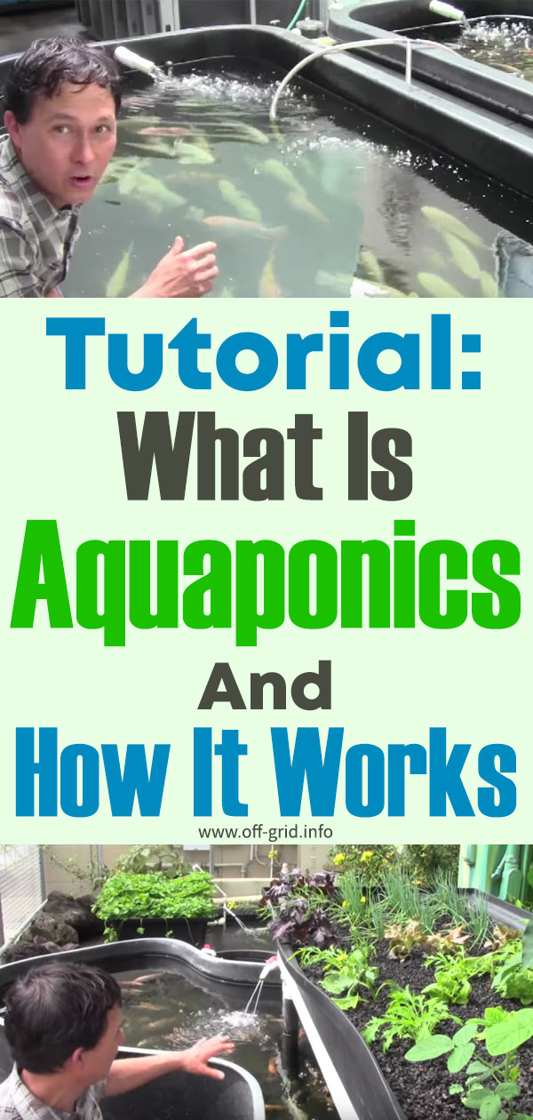 Tutorial What Is Aquaponics And How It Works