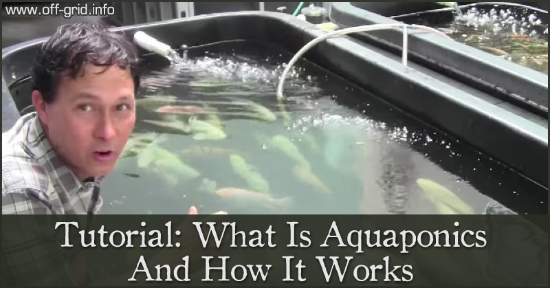 Tutorial - What Is Aquaponics And How It Works