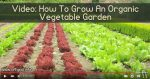 Video: How To Grow An Organic Vegetable Garden