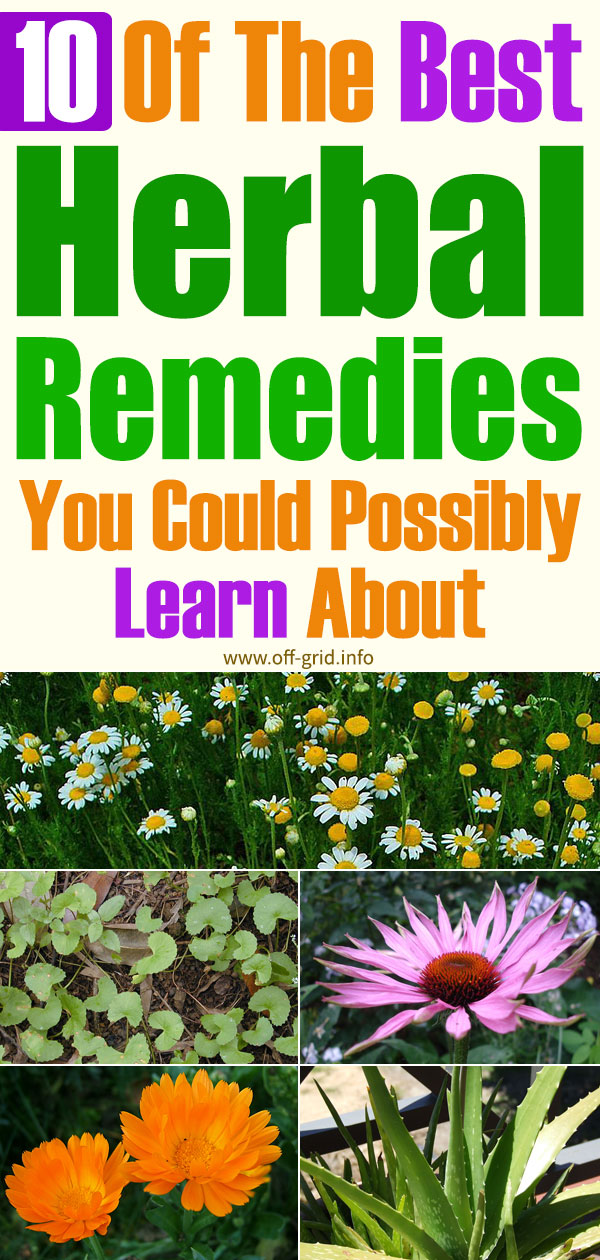 10 Of The Best Herbal Remedies You Could Possibly Learn About
