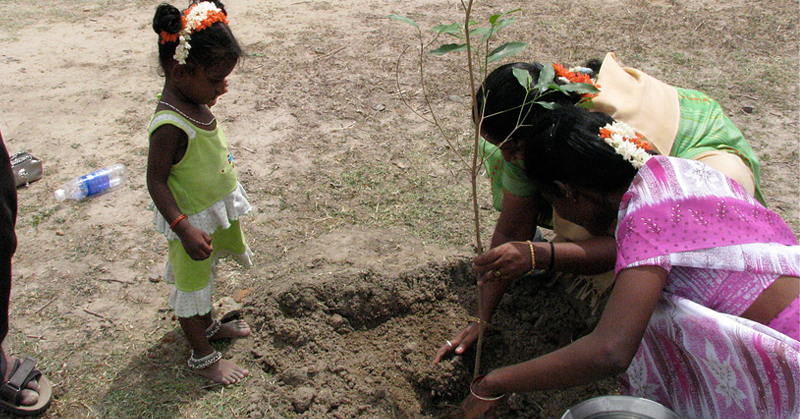 India Just Planted 66 Million Trees In 12 Hours