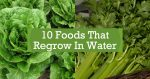 10 Foods That Regrow In Water
