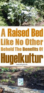 A Raised Bed Like No Other: Behold The Benefits Of Hugelkultur