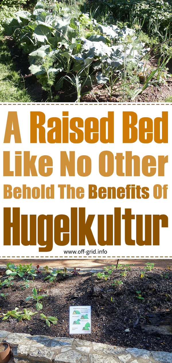 A Raised Bed Like No Other Behold The Benefits of Hugelkultur