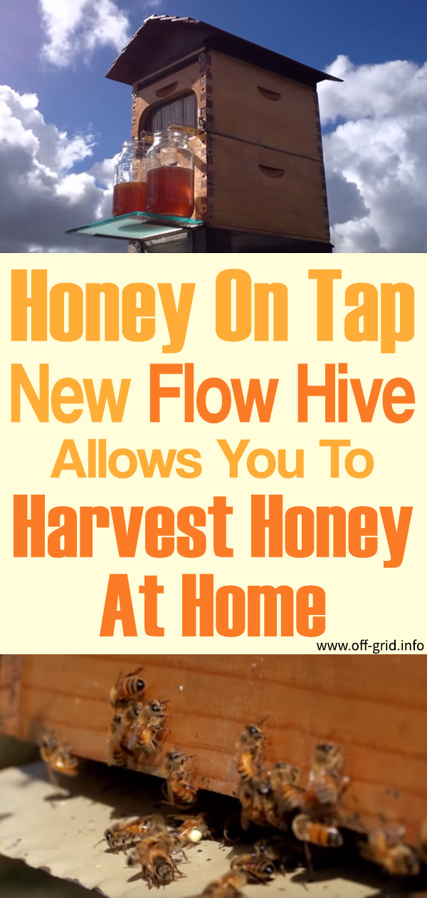 Honey On Tap – New Flow Hive Allows You To Harvest Honey At Home