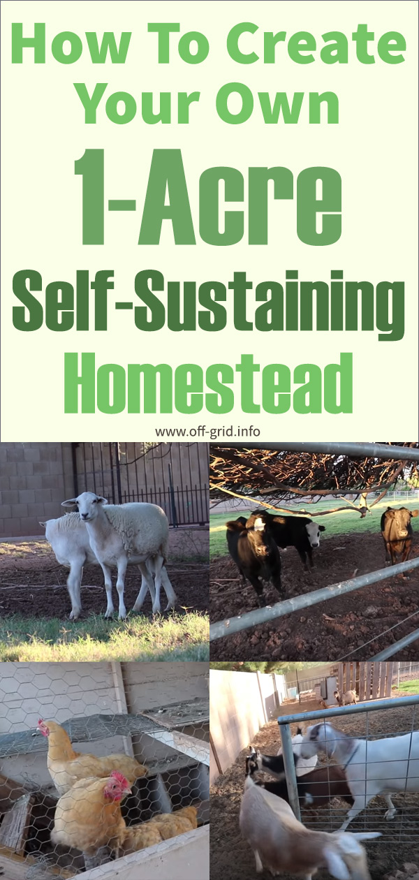 How To Create Your Own 1-Acre Self-Sustaining micro Farm Homestead