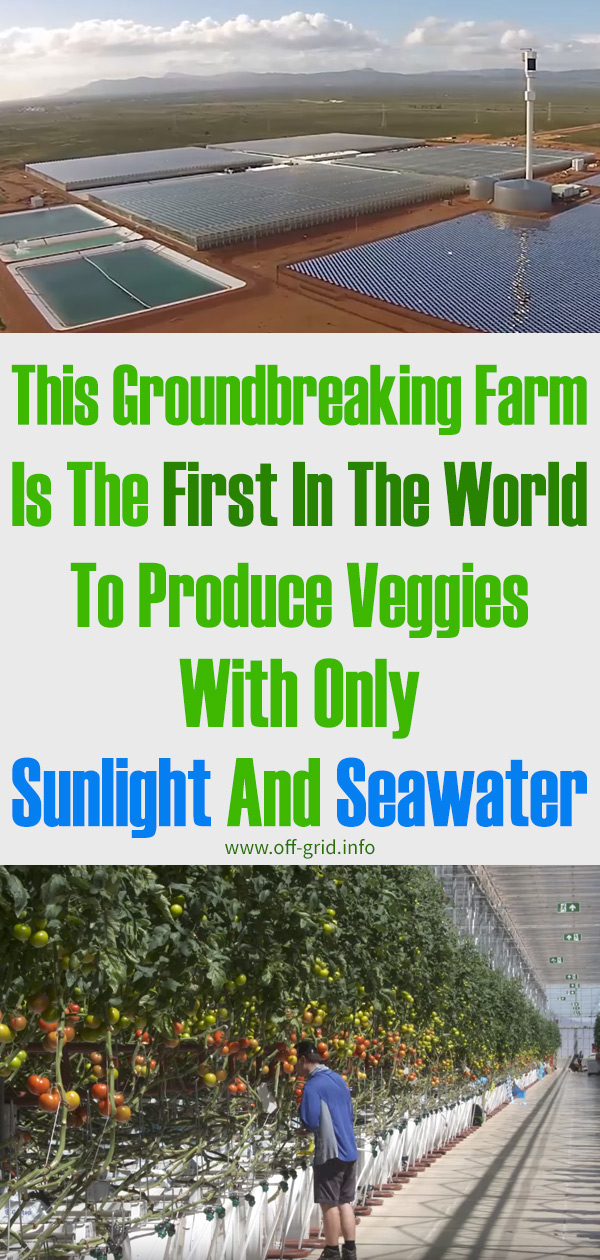 This Groundbreaking Farm Is The First In The World To Produce Veggies With Only Sunlight And Seawater