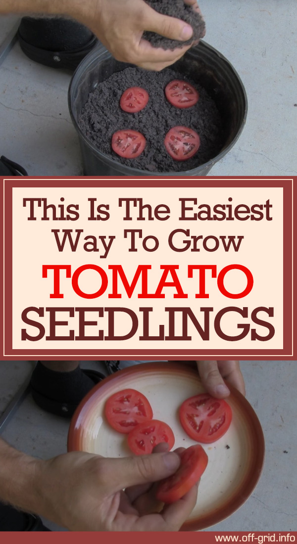 This Is The Easiest Way To Grow Tomato Seedlings