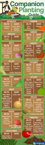 Companion Planting Guide – Pin, Share, Print Out