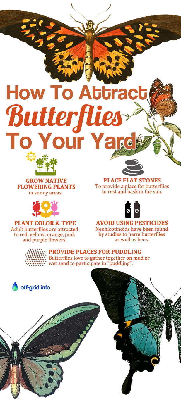 How Attract Butterflies To Your Yard
