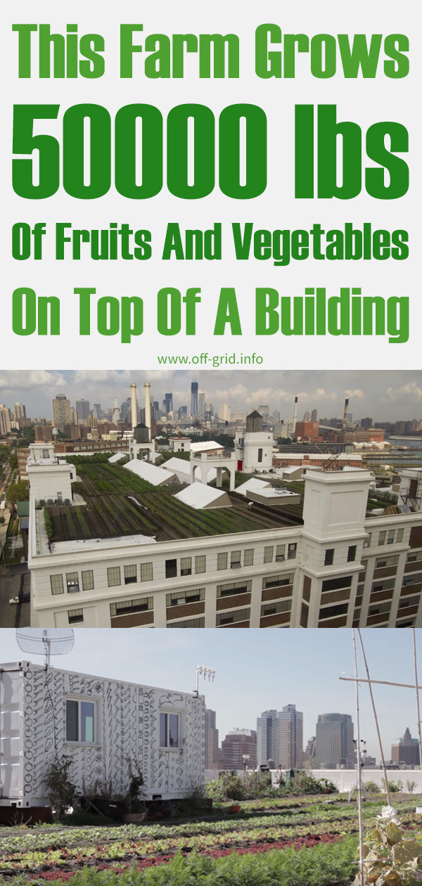 This Farm Grows 50000 lbs Of Fruits And Vegetables On Top Of A Building