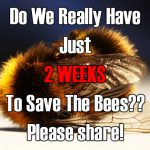 Urgent: Save The Bees