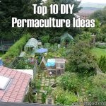 Top 10 DIY Permaculture Ideas