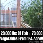 20,000 lbs Of Fish + 70,000 Vegetables From 1/4 Acre!!