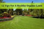 12 Tips For A Healthy Organic Lawn