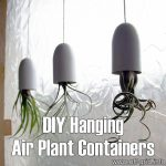 DIY Hanging Air Plant Containers