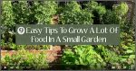 9 Easy Tips To Grow A Lot Of Food In A Small Garden
