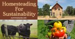 Homesteading For Sustainability