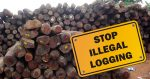 Shocking Report On Illegal Logging In The Amazon – And What You Can Do To Help