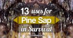 13 Uses Of Sticky Pine Sap For Wilderness Survival And Self-Reliance