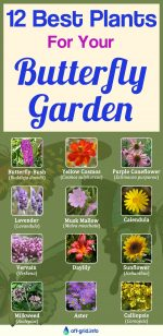 12 Best Plants For Your Butterfly Garden